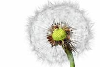 AllergyPlus/ECARF
